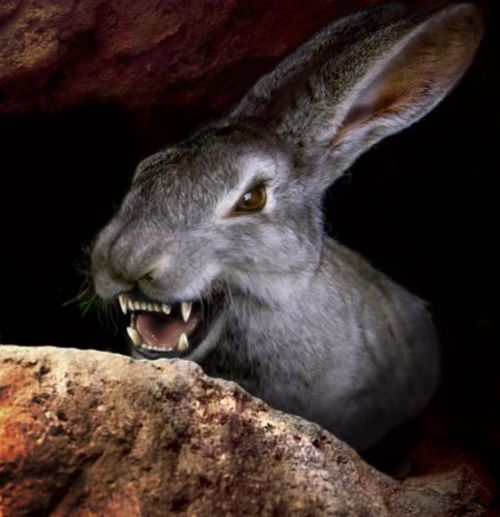 night_of_the_lepus_fangs.jpg